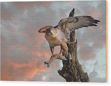 Bird Of Prey Wood Print by Barbara Manis