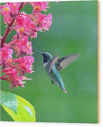 Black Chinned Hummingbird Wood Print