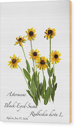 Black-eyed-susan Wood Print