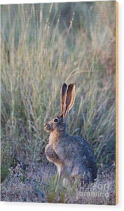 Black-tailed Jackrabbit Wood Print by Martha Marks