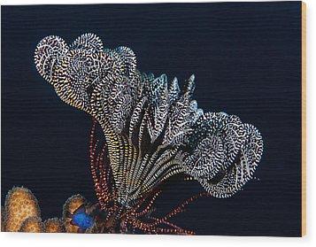 Black Tie Event Wood Print by Paula Marie deBaleau