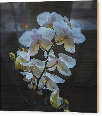 Blooming Orchid Wood Print
