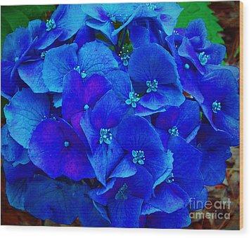 Blue Beauty Wood Print by Annette Allman