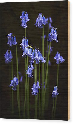Blue Bells Wood Print by Svetlana Sewell