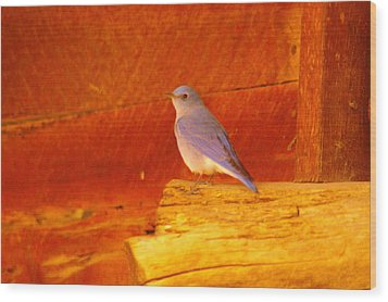 Blue Bird Wood Print by Jeff Swan