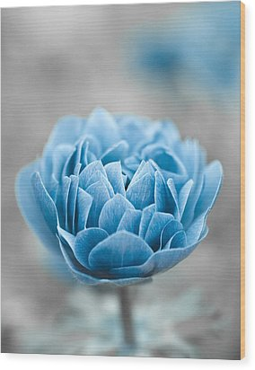 Blue Flower Wood Print by Frank Tschakert
