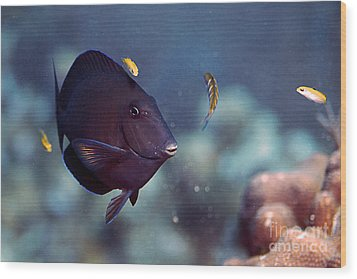 Blue Tang Wood Print by JT Lewis