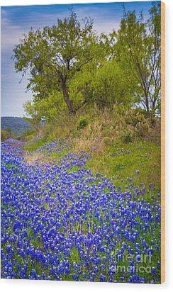 Bluebonnet Meadow Wood Print by Inge Johnsson