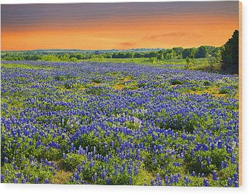 Bluebonnet Sunset  Wood Print