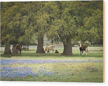 Bluebonnets And Bovines Wood Print