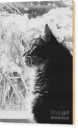 Wood Print featuring the photograph Bo by Jacqueline McReynolds