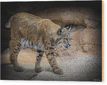 Bobcat Wood Print by Elaine Malott