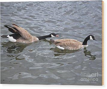 Bossy Canada Goose Wood Print by Susan Wiedmann