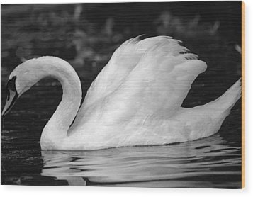 Boston Public Garden Swan Wood Print