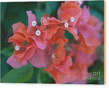 Bougainvillea Wood Print by Roselynne Broussard