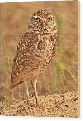 Burrowing Owl Wood Print by Nancy Landry