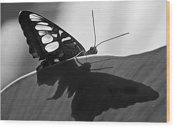 Butterfly II Wood Print by Ron White