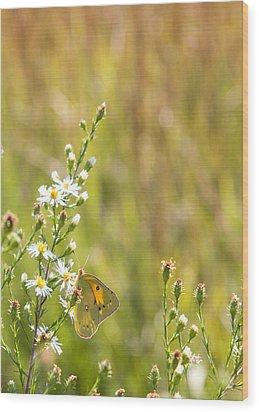 Butterfly In A Field Of Flowers Wood Print
