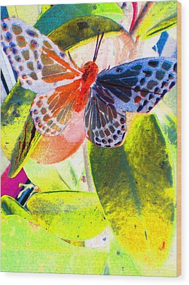 Butterfly  Wood Print by Nico Bielow