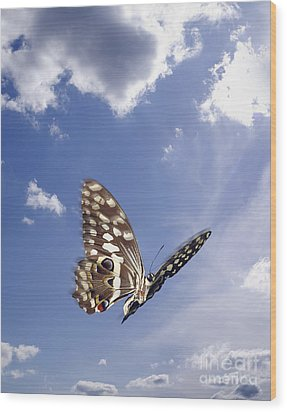 Butterfly Wood Print by Tony Cordoza