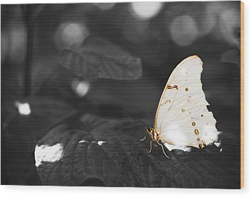 Butterfly Wood Print by Bradley R Youngberg