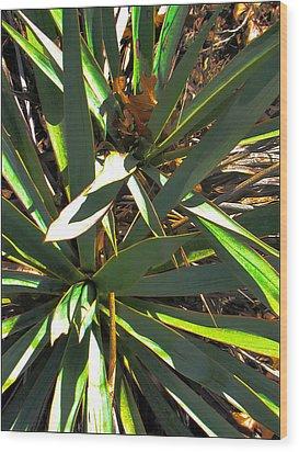 Cactuscomp3 2009 Wood Print