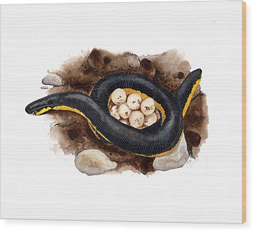 Caecilian Wood Print by Cindy Hitchcock
