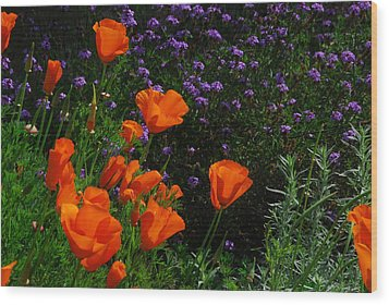 California Poppies Wood Print by Lynn Bauer