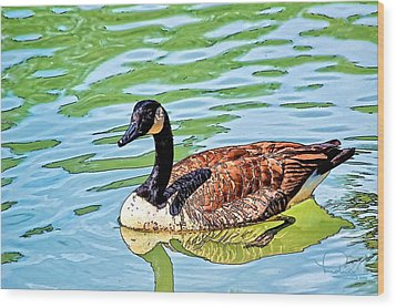 Wood Print featuring the photograph Canada Goose by Ludwig Keck