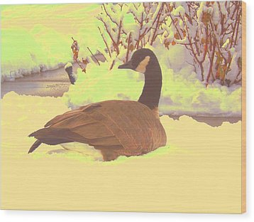 Canadian Goose Wood Print by Larry Campbell