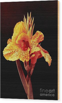 Canna Lilly Wood Print by Michael Hoard