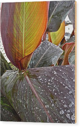 Canna Lily I  Wood Print by Kirsten Giving