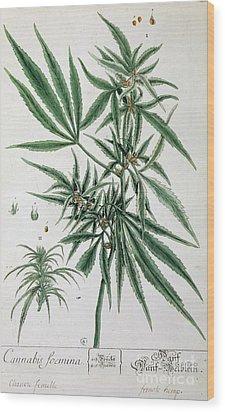 Cannabis  Wood Print by Elizabeth Blackwell