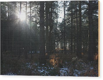 Wood Print featuring the photograph Cannock Chase by Jean Walker
