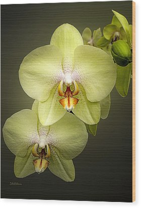 Cascade Of Yellow Orchids Wood Print