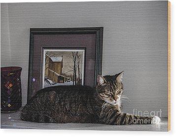 Cat At Rest Wood Print