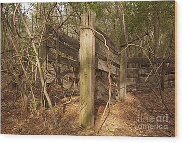 Catchpen Wood Print by Russell Christie