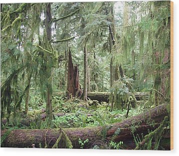Wood Print featuring the photograph Cathedral Grove by Marilyn Wilson