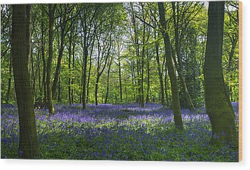 Chalet Wood Wanstead Park Bluebells Wood Print