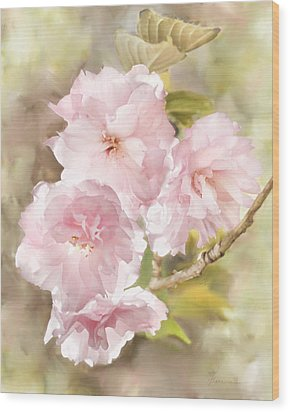 Cherry Blossoms Wood Print by Francesa Miller