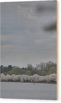 Cherry Blossoms - Washington Dc - 011323 Wood Print by DC Photographer