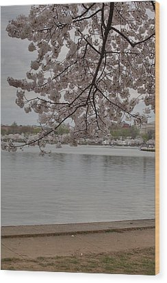 Cherry Blossoms - Washington Dc - 011336 Wood Print by DC Photographer