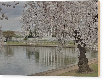 Cherry Blossoms With Jefferson Memorial - Washington Dc - 01135 Wood Print by DC Photographer