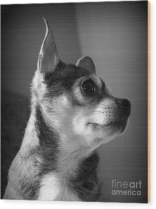 Chihuahua Wood Print by Michelle Wolff