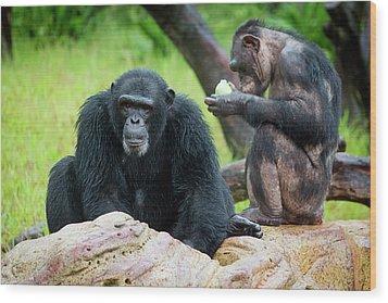 Chimpanzees Wood Print by Pan Xunbin