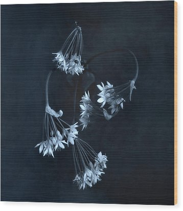 Wood Print featuring the photograph Chive Blossoms by Louise Kumpf