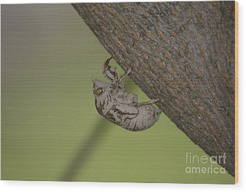 Wood Print featuring the photograph Cicada by Randy Bodkins