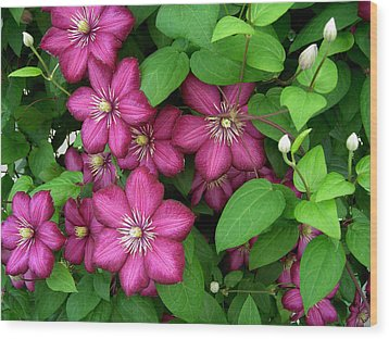 Clematis Wood Print by Penny Lisowski