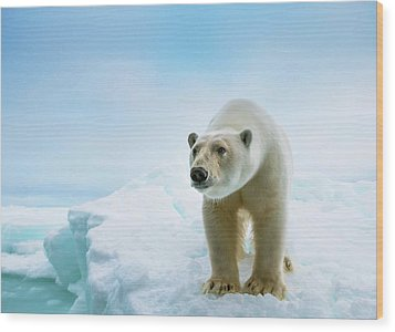 Close Up Of A Standing Polar Bear Wood Print