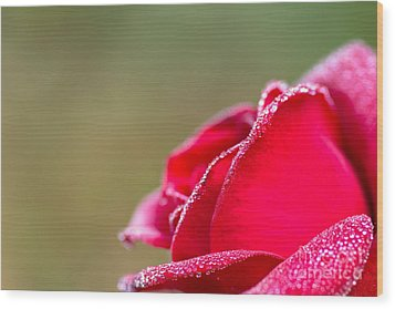 Wood Print featuring the photograph Close-up Of Red Rose With Water Drops by Tosporn Preede